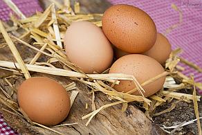 Körners Hofladen-Fotos - Käse - Eier - Nudeln