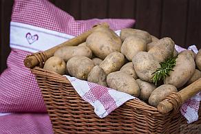 Körners Hofladen-Fotos - Obst und Gemüse